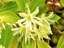 Világos sárga virágok egy badian