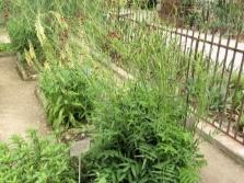 Бърнет в градината