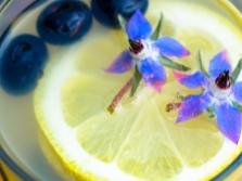 Limonada De Borraja