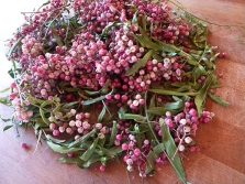 Rozā pipari ar zariņiem