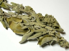 Salvia officinalis en ginecologia