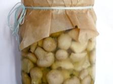 Marinierte Pilzregenmäntel