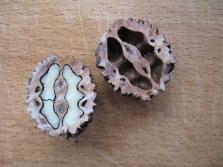 Манджурският орех има няколко характеристики