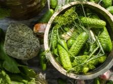 Копър в консервирани краставици