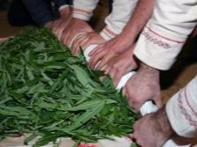 Ivan-tea levelek