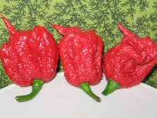 Pepper Carolina Reaper