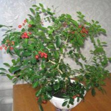 Frutas caseras de muraya