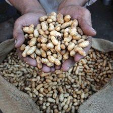 Amendoim a granel