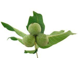 Cultivo de nueces