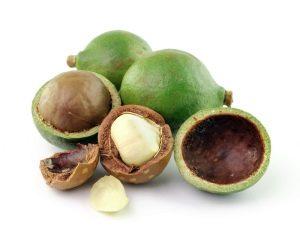 Australische Nuss - Macadamia