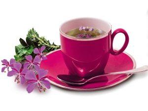 """Kaip tinkamai užvirinti Ivano arbatą, """"Koporsky"""" arbata"""