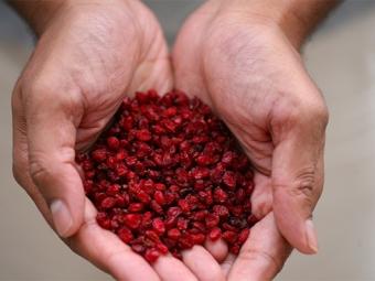 Beri kering barberry