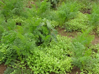 Γλάστρες στον κήπο