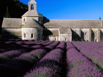 Levandos laukai Prancūzijos pietuose