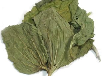 Ξηρά φύλλα φυτά
