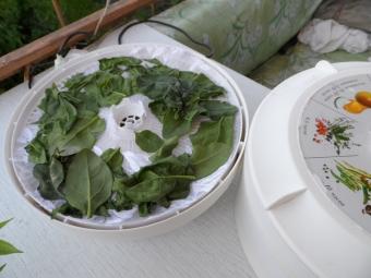 Espinafre de secagem em um secador