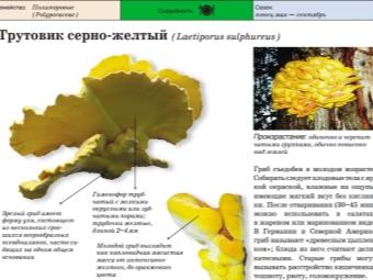 טינדר הוא צהוב גופרית