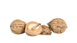Манджурски орех