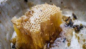 Mel abelhas selvagens: o que é e como escolher?