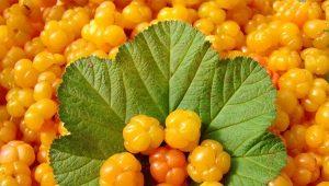 Cloudberry: propriedades úteis e contra-indicações