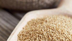 Amaranto sėklos: kas yra, kaip naudoti ir virti?