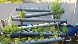 Kas yra hidroponika ir kaip pasirinkti daržovių auginimo įrangą?
