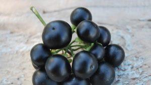 Sunberry: kehalusan penanaman, sifat-sifat bermanfaat beri dan kontraindikasi