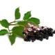 Elderberry fekete