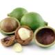 Macadamia (orzech australijski)