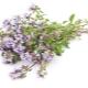 Thyme (thyme, rumput Bogorodskaya)