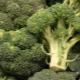 Jak upiec brokuły w piekarniku: przepisy i zalecenia