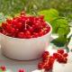 Grosella roja: las mejores variedades y recetas.