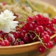 Currant merah Gula: ciri dan teknologi pertanian