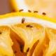 De onde vêm os mosquitos da fruta e como se livrar deles?