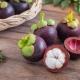 Manggis (manggis, manggis): ciri buah, aplikasinya dan petua-petua yang sedang berkembang