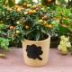Roomhade bilik: perihalan dan butiran tumbuh tumbuhan
