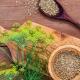 Krapų sėklos vaistinės savybės ir savybės