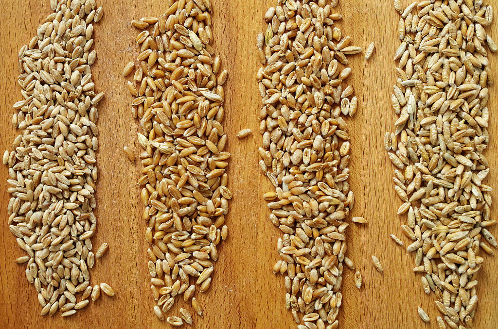 القمح الطري الاختلافات عن القمح القاسي Gost