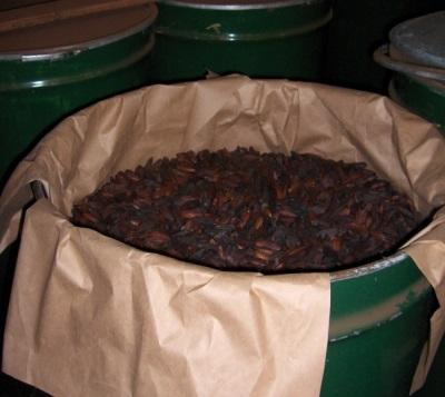 Feijão tonka