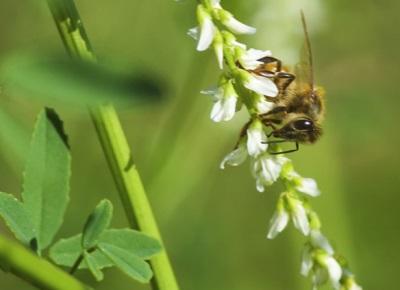 Melk Honey