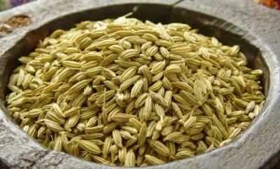 Nasiona kopru włoskiego są wykorzystywane do celów leczniczych.