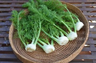 Erva-doce é usado em cosmetologia, medicina, culinária