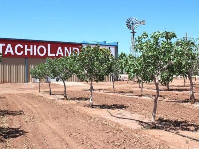 Pistachio Plantation