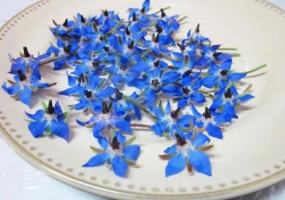 Flores de borraja