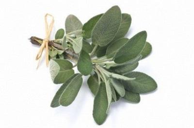 Полезни свойства на градински чай
