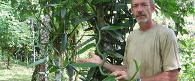 كيف تنمو الفانيليا