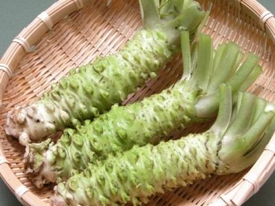 Raízes de plantas Wasabi