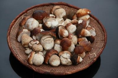 Białe grzyby - dużo