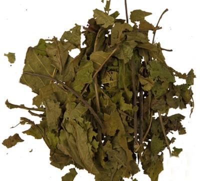 Las hojas de nogal son ricas en nutrientes y, por lo tanto, se usan en medicina.