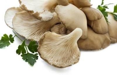 Austrių grybai padeda suskaidyti riebalus.